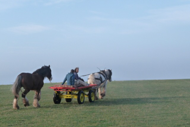 horse and cart hire